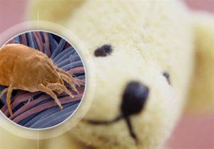 пылевые клеши и аллергия