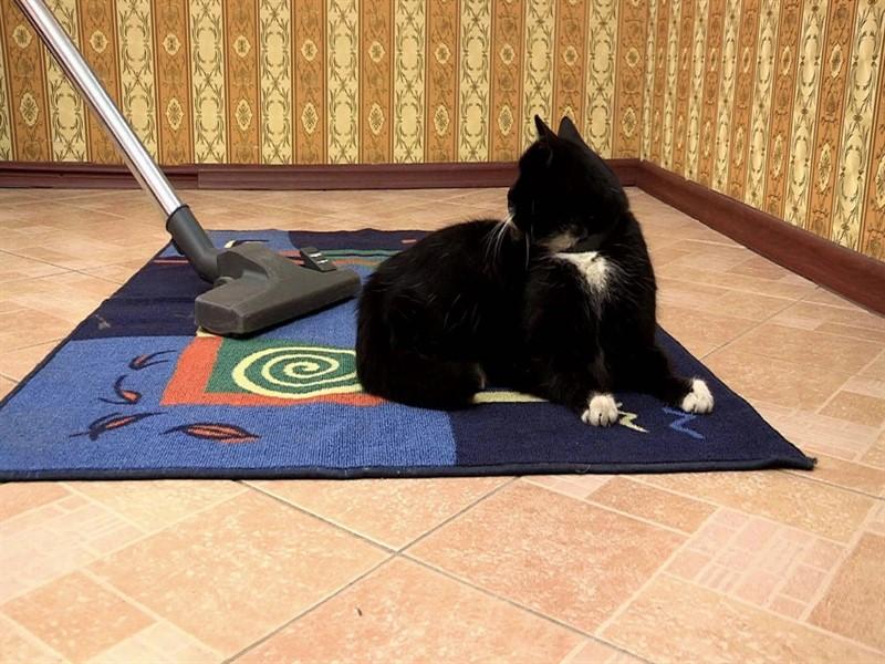 шерсть животных на ковре
