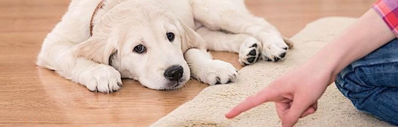 чистка ковра от мочи собаки